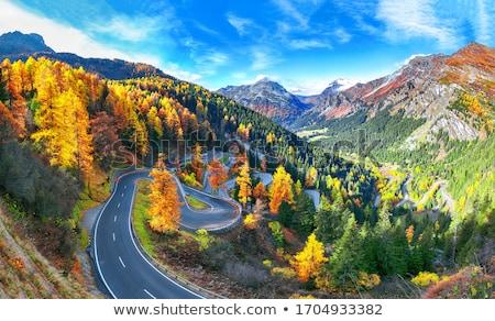 осень · альпийский · деревья · желтый · стране - Сток-фото © thp