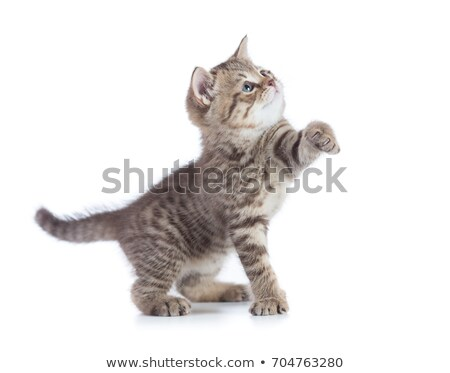 孤立した · 子猫 · 動物 · ペット · かわいい · 誰も - ストックフォト © mikdam