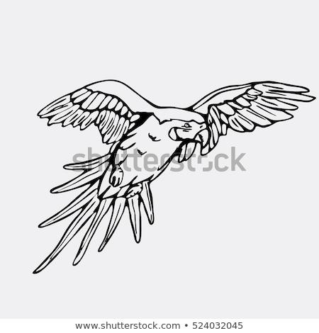 штампа изображение Parrot бумаги лес искусства Сток-фото © perysty