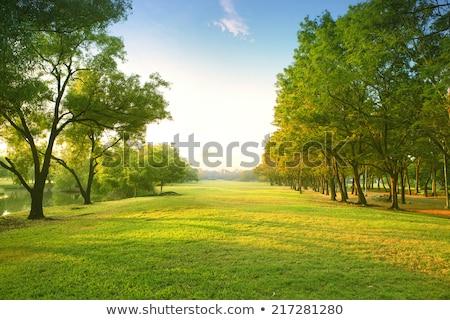 Zöld park fák fű nap naplemente Stock fotó © cherju