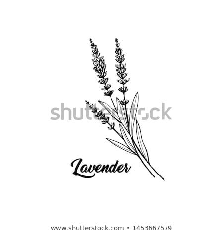 植物 フランス語 アルプス山脈 花 緑 ストックフォト © ultrapro