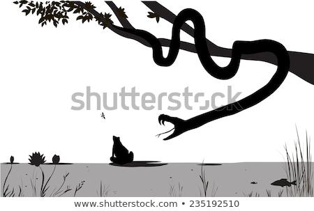snake eating frog at swamp stock photo © yanukit