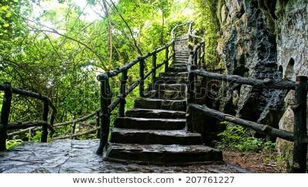 zdumiewający · kamień · schody · ogrodzenia · drzewo · scena - zdjęcia stock © xuanhuongho