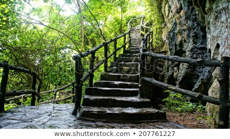 Amazing Stone Staircase Fence Tree Foto stock © xuanhuongho