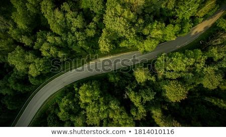 Empty road through forest Stock photo © hraska