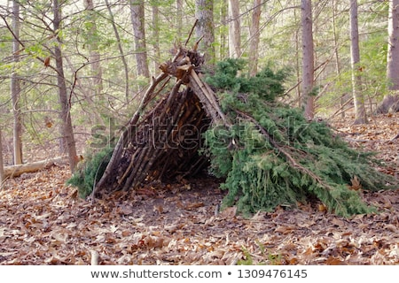 fire ring in a mountain forest Stock photo © PixelsAway