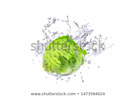 Vers groene sla geïsoleerd witte blad Stockfoto © premiere