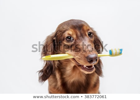 Dental care for dog Stock photo © ivonnewierink
