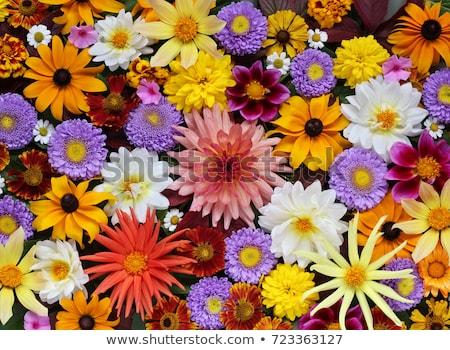 flowers on a background of mountains stock photo © kotenko