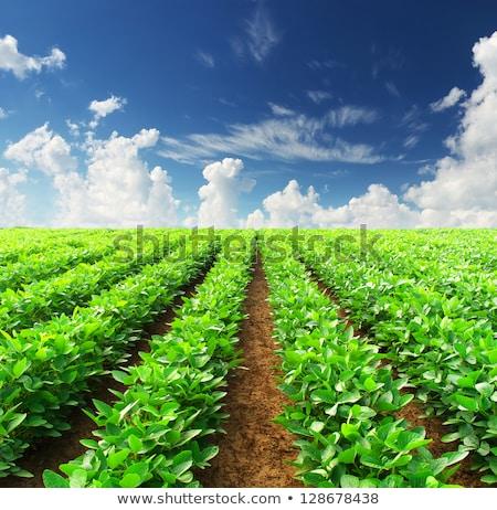 Mezőgazdaság mezők napos idő kék ég fölött vidék Stock fotó © hraska