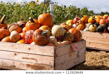 Pumpkins in the wooden box preparing for sale Stock photo © alex_grichenko