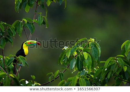 Wild Bird Stock photo © bluering