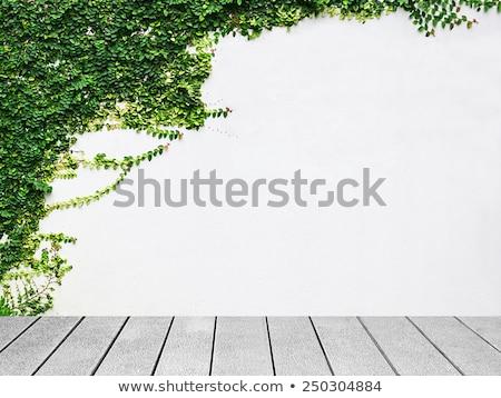 Cinza parede hera folhas verdes naturalismo marfim Foto stock © Kotenko
