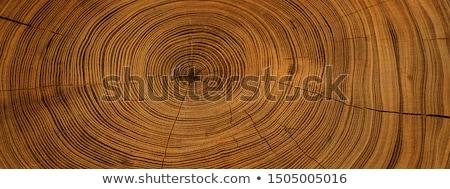 Starożytnych drzewo piękna krajobraz widoku chmury Zdjęcia stock © iko