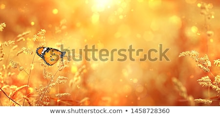 Bright autumn butterfly Stock photo © sahua