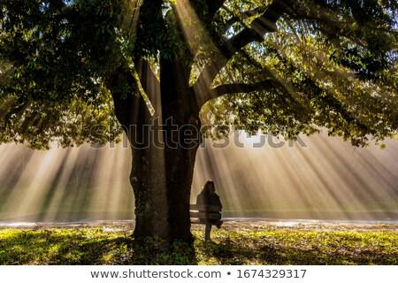 Carvalho grande crescimento blue sky ver árvore Foto stock © zhekos