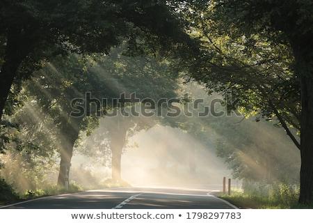 Manhã névoa inverno paisagem árvores céu Foto stock © CaptureLight