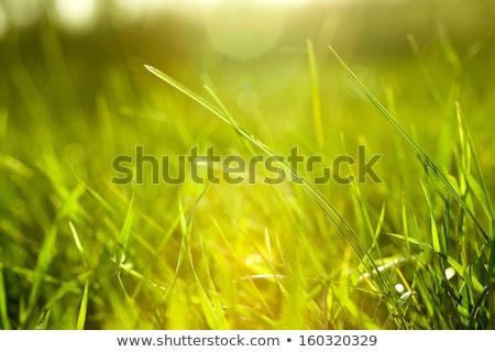 Legelő absztrakt természetes hátterek szépség fiatal Stock fotó © tolokonov