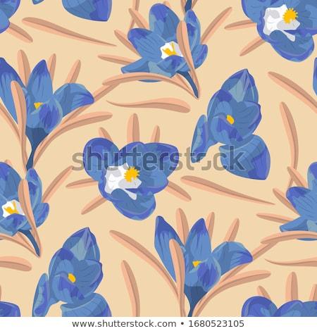Blu crocus fiore nice fiore tempo Foto d'archivio © taden
