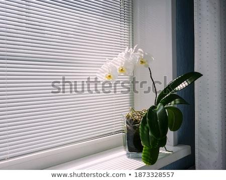 gyönyörű · virágok · fehér · szeretet · születésnap · szépség - stock fotó © Peredniankina