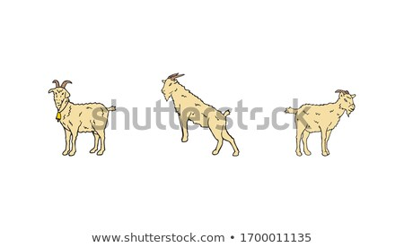 ovelha · rebanho · Eslováquia · viajar · grupo · montanhas - foto stock © hraska