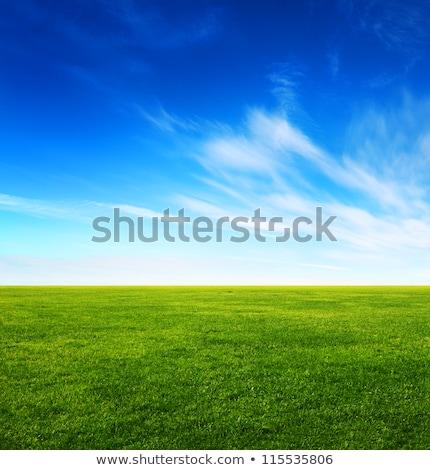 Green grass field and bright blue sky Stock photo © karandaev