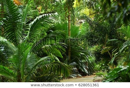 Tropical Walkway Stock photo © THP