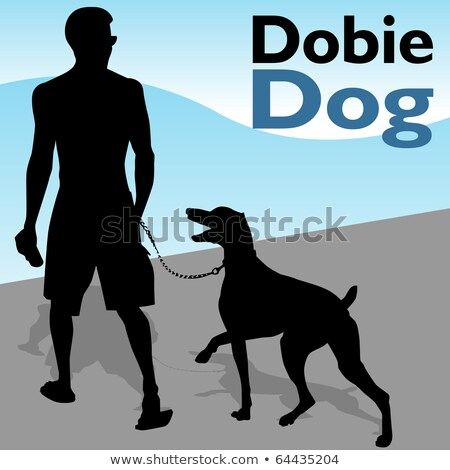 Man Walking Doberman Pinscher Dog Stock photo © cteconsulting