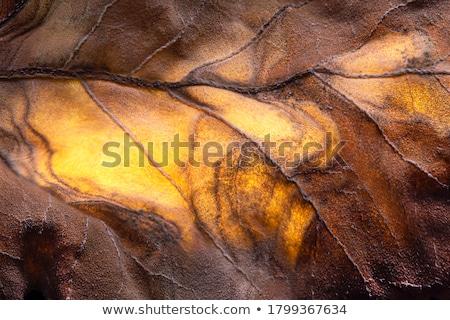 otono · arce · hojas · textura · grunge · grunge · máscara - foto stock © vectorikart
