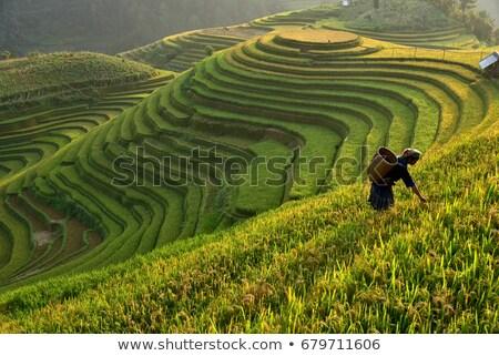 Yeşil pirinç alanları bali ada gıda Stok fotoğraf © JanPietruszka