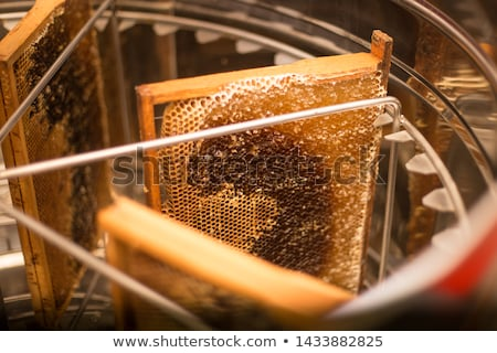 miele · produzione · api · texture · medicina - foto d'archivio © jordanrusev