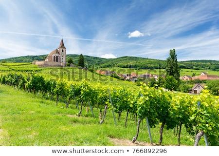Frankrijk · hart · wijngaard · weg · wijn · kerk - stockfoto © vichie81