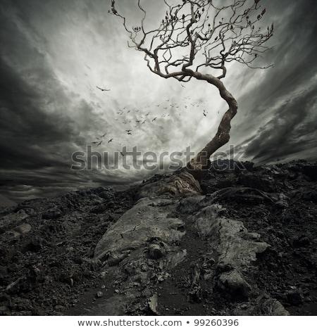 bergen · stormachtig · landschap · panorama · wandelaars · lopen - stockfoto © kotenko