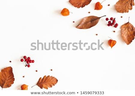 Rowan berries and leaves Stock photo © neirfy
