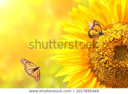 Butterfly Flower Pollination Stock photo © lenm
