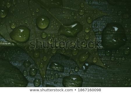 Iridescent Teardrops Background Stock photo © solarseven