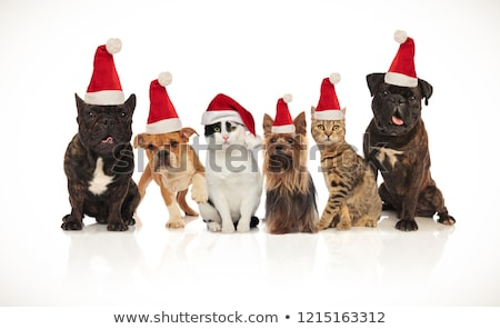 Stock photo: six happy cats and dogs wearing santa hats