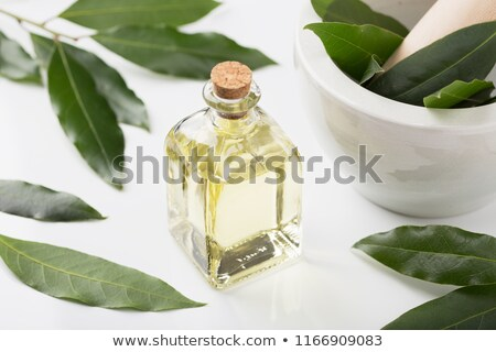A bottle of bay leaf essential oil with fresh bay leaves Stock photo © madeleine_steinbach