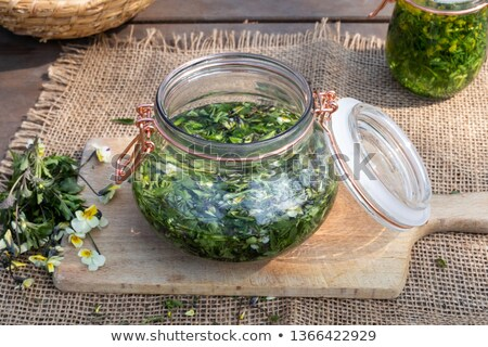 Preparation of tincture from fresh Viola arvensis Stock photo © madeleine_steinbach