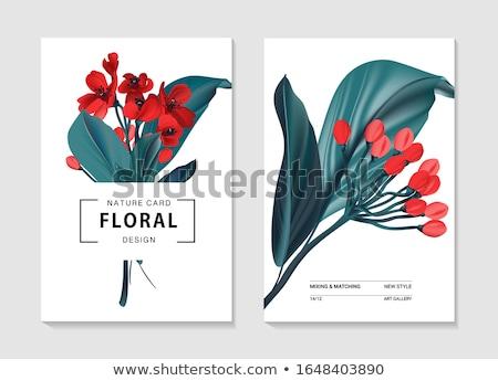 Rood · tulp · vector · wenskaart · verbazingwekkend · bloem · vector - stockfoto © frimufilms