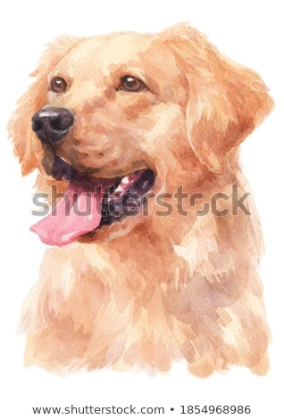 Watercolor portrait of long-haired toy terrier with a yellow elegant hat Stock photo © Natalia_1947