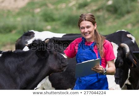 Zwierząt krowy zestaw dziewczyna szkoda pośpieszny Zdjęcia stock © toyotoyo