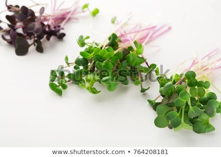Stockfoto: Vers · micro · erwten · licht · bladeren
