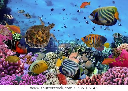 Photo of a tropical Fish on a coral reef Stock photo © galitskaya