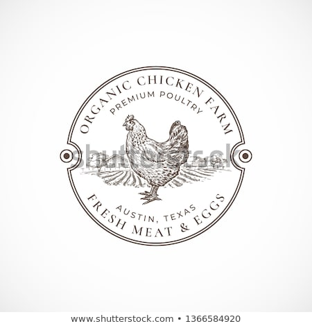 Border template design with chickens on the barn Stock photo © bluering