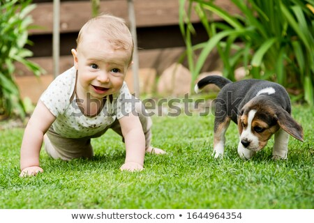 Baby creep on grass Stock photo © Paha_L