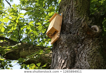 Bat box Stock photo © rbiedermann