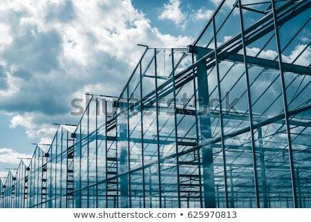 campo · serra · crescita · verdura · coperto · plastica - foto d'archivio © compuinfoto