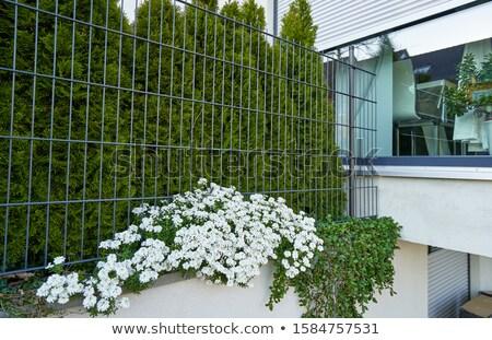 Witte bloem nat bloemen water Stockfoto © stocker
