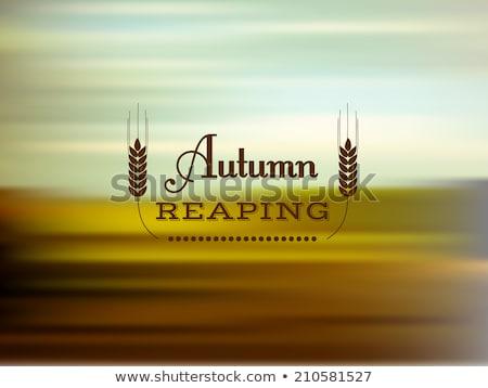 小麦 玉米 场水 春天 叶 商业照片 meinzahn